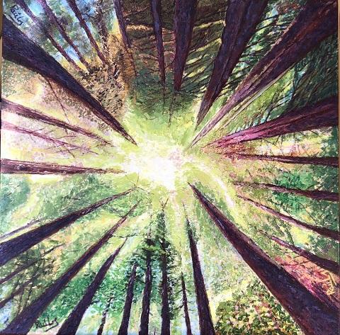 168Despertar al bosc-web