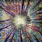 206Despertar al bosc-web